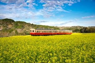 石神の菜の花畑を走る小湊鉄道の写真素材 [FYI01494528]