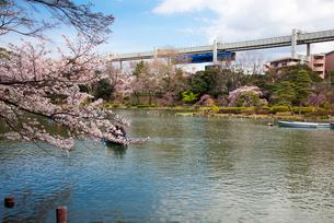 桜咲く千葉公園 綿打池とモノレールの写真素材 [FYI01494533]