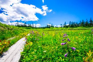 八幡平木道と草原の写真素材 [FYI01494584]