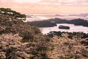 西行戻しの松公園より輝く松島湾の写真素材 [FYI01494604]
