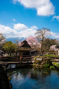 忍野八海・湧池から望む富士山の写真素材 [FYI01494683]