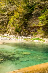 智里 本谷川の写真素材 [FYI01494827]