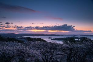桜満開の西行戻しの松公園より朝焼けに染まる空と松島湾の写真素材 [FYI01494841]