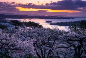 桜満開の西行戻しの松公園より朝焼けに染まる松島湾と空の写真素材 [FYI01494871]
