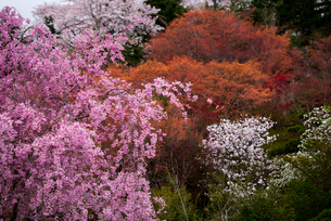 花見山公園の写真素材 [FYI01494882]