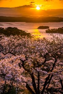 桜満開の西行戻しの松公園より朝焼けに染まる松島湾と日の出の写真素材 [FYI01495361]