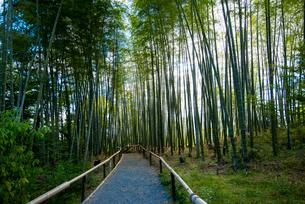 高台寺竹林の写真素材 [FYI01495399]