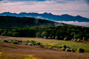 コナシ咲く踊場湿原と雲海に浮かぶ八ヶ岳連峰の写真素材 [FYI01495648]