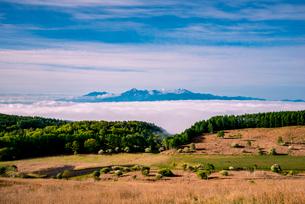 コナシ咲く踊場湿原と雲海に浮かぶ南アルプス連峰の写真素材 [FYI01495908]