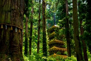 羽黒山五重塔と爺杉の写真素材 [FYI01496301]