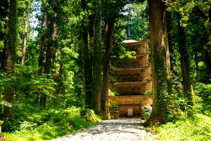 羽黒山 五重塔と巨木の杉林の写真素材 [FYI01496464]