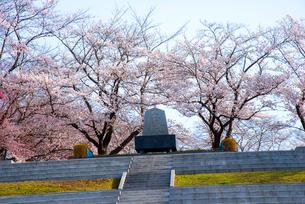 天童公園満開の桜と将棋供養塔の写真素材 [FYI01496529]