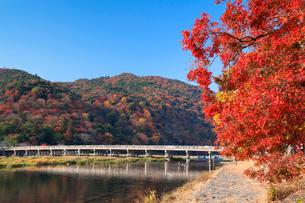 秋の嵐山と渡月橋の写真素材 [FYI01496557]