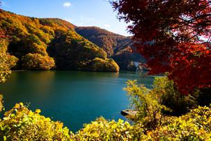 秋のもみじ湖 箕輪ダム の写真素材 [FYI01496887]