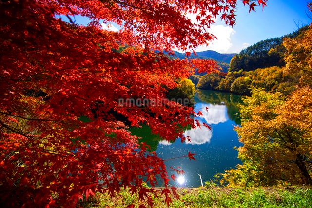カエデ紅葉と湖の写真素材 [FYI01497019]