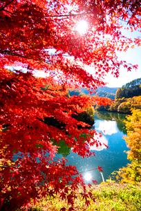 カエデ紅葉と湖の写真素材 [FYI01497032]