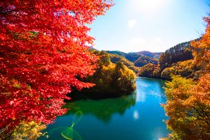 カエデ紅葉ともみじ湖(箕輪ダム)の写真素材 [FYI01497059]