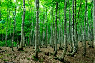 美人林の写真素材 [FYI01497075]
