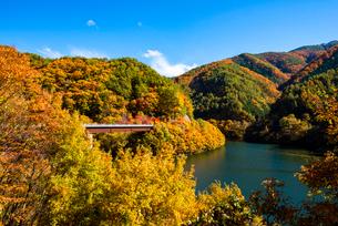 秋のもみじ湖 箕輪ダム の写真素材 [FYI01497244]