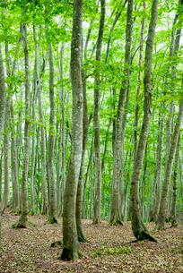 美人林の写真素材 [FYI01497269]