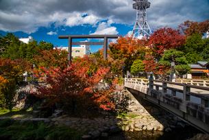 松本市 秋の四柱神社の写真素材 [FYI01497339]