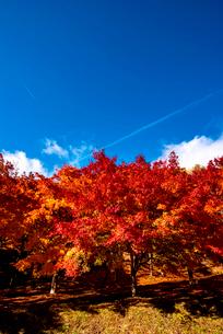 もみじ湖 紅葉の末広広場の写真素材 [FYI01497431]