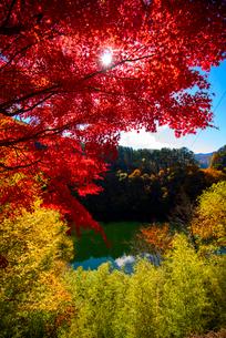 カエデ紅葉と湖(もみじ湖)の写真素材 [FYI01497510]