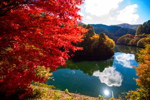 カエデ紅葉と空映すもみじ湖の写真素材 [FYI01497515]