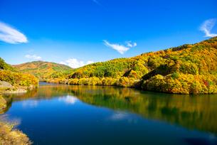 秋のもみじ湖 箕輪ダム の写真素材 [FYI01497610]