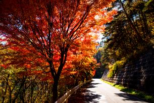 紅葉の並木の写真素材 [FYI01497666]