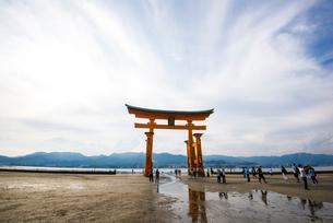 厳島神社大鳥居の写真素材 [FYI01497707]