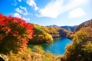 紅葉するもみじ湖 箕輪ダム の写真素材 [FYI01497848]