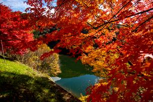 紅葉のもみじと湖の写真素材 [FYI01497872]