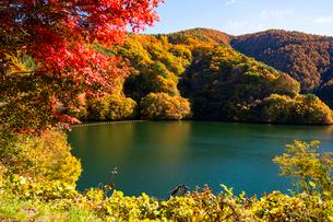 秋のもみじ湖 箕輪ダム の写真素材 [FYI01497890]