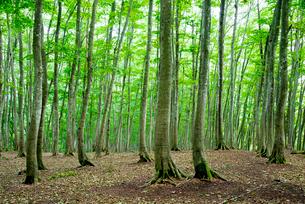 美人林の写真素材 [FYI01497912]
