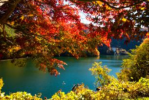 秋のもみじ湖 箕輪ダム の写真素材 [FYI01497979]