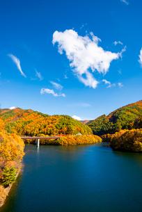 秋のもみじ湖 箕輪ダム の写真素材 [FYI01498096]