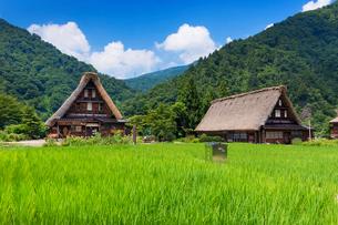 五箇山菅沼集落の写真素材 [FYI01498360]