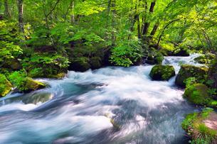 奥入瀬渓流の写真素材 [FYI01498441]