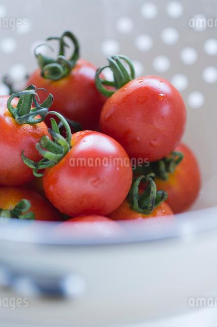 水切りボウルの中のミディアムトマトの写真素材 [FYI01499036]