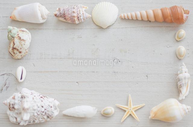 貝殻のオブジェのフレームの写真素材 [FYI01499057]