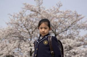 新入学の小学1年生の女の子と桜の写真素材 [FYI01499182]