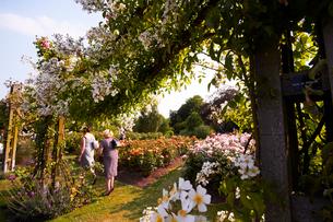 クィーンメアリーローズガーデンのバラの写真素材 [FYI01499504]