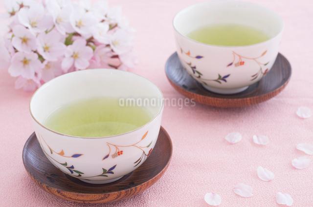 日本茶と桜の花びらの写真素材 [FYI01499526]