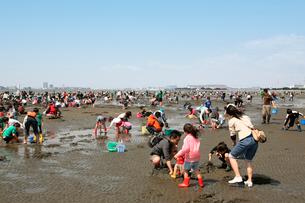 船橋三番瀬海浜公園で潮干狩りをする人々の写真素材 [FYI01500185]