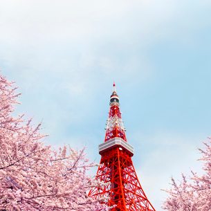 東京タワーの写真素材 [FYI01500311]