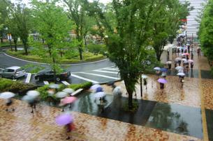 雨の朝の街の写真素材 [FYI01500803]