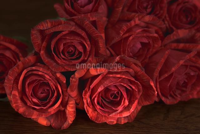 赤い薔薇の写真素材 [FYI01501333]