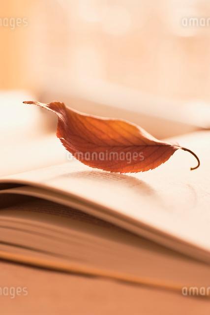 開いた本と一枚の枯葉の写真素材 [FYI01501391]