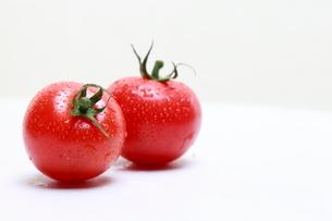 トマトの写真素材 [FYI01501554]